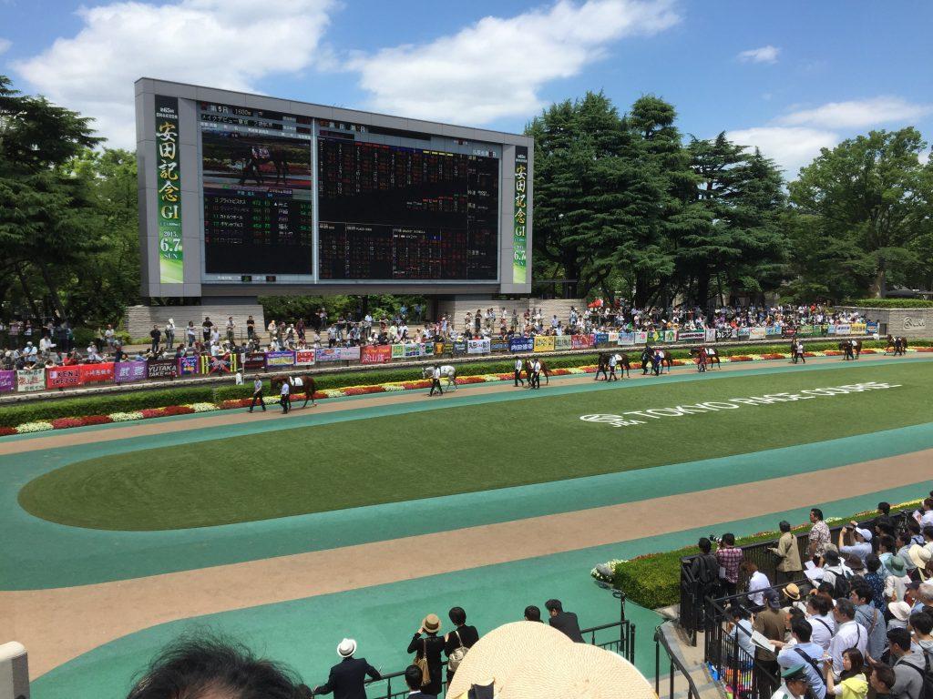 Paddox at Tokyo Racecourse