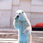 Sapporo Maruyama Zoo Ramen - White Bear Shio Salt