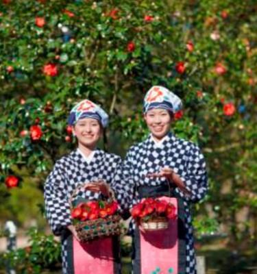 OSHIMA TSUBAKI Premium Conditioner - 100% Pure Camellia Oil