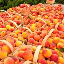 MORINAGA Hi-Chew Okayama Shimizu White Peach Flavour