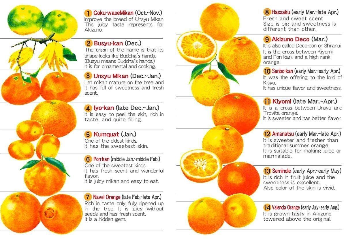 Kit Kat Japanese Iyokan Mandarin Orange 12 Pieces Available Only in Japan