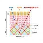 DHC Suncut Gel Q10 EX SPF50+ PA 50g Made in Japan