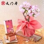 BUNMEIDO Sakura Honey Castella Limited Edition Made in Japan